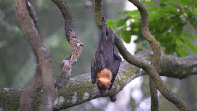 baby fruit bat