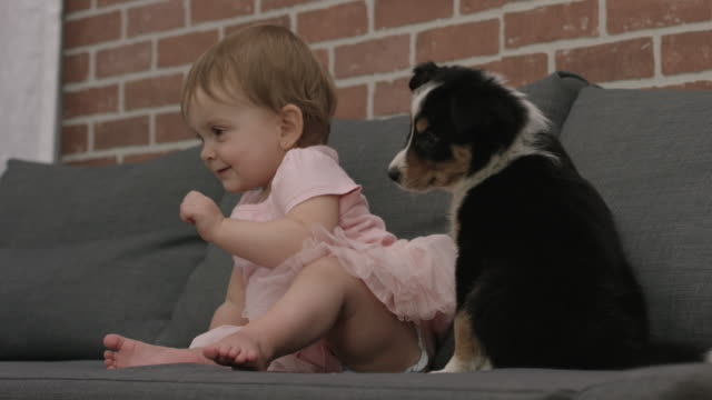 baby girl and a puppy - young animal stock videos and b-roll footage