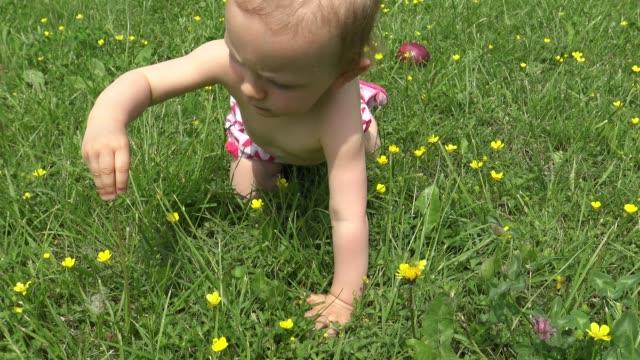 クロールと緑の草で遊ぶ女の赤ちゃん - 赤ちゃんのみ点の映像素材/bロール