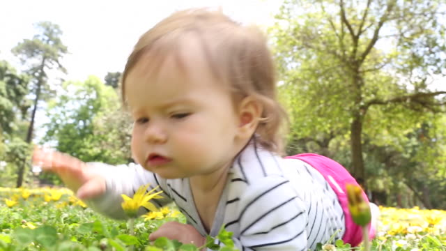 a baby girl crawling outdoors in a park with flowers and grass around her. - 生後6ヶ月から11ヶ月点の映像素材/bロール