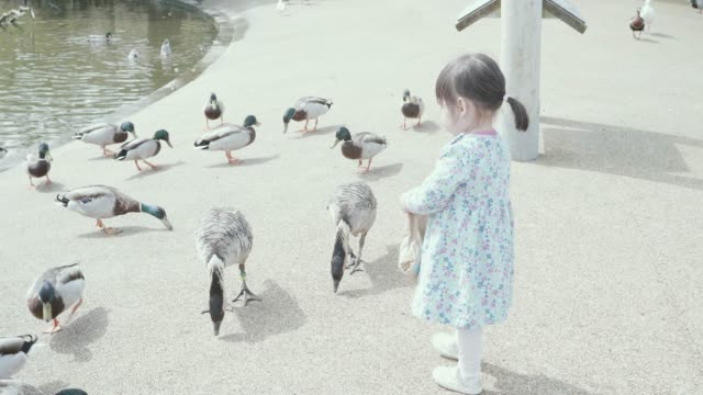 baby girl feeding wild duck on countryside pond - feeding stock videos & royalty-free footage