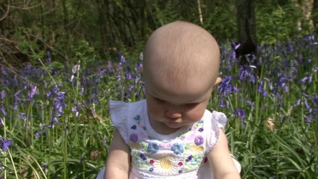baby girl playing in a field of bluebells - endast en pojkbaby bildbanksvideor och videomaterial från bakom kulisserna