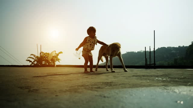 baby girl playing with dog during sunset time - hd format stock videos & royalty-free footage