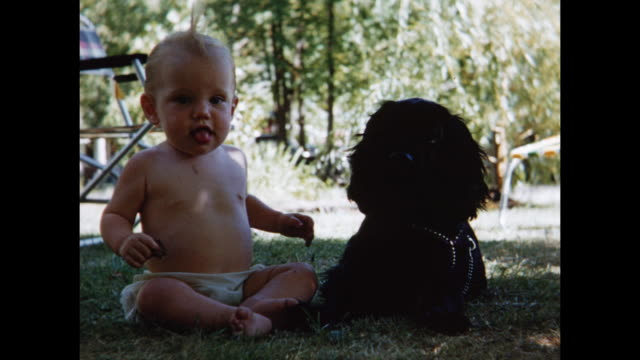 vidéos et rushes de 1955 montage baby girl (12 months) sitting on grass with dog, dog knocking baby over / toronto, canada - 12 17 mois