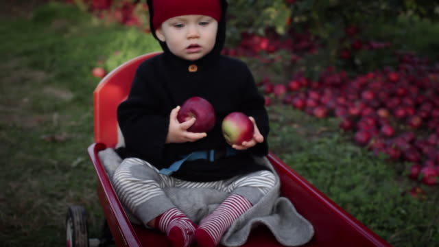 ms baby girl (6-11 months) with apples in cart being pulled through apple orchard / water mill, new york, usa - 6 11 months stock videos & royalty-free footage