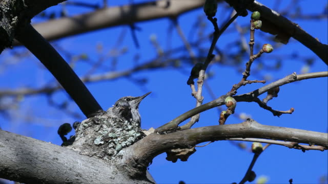 baby hummingbird - animal nest stock videos and b-roll footage