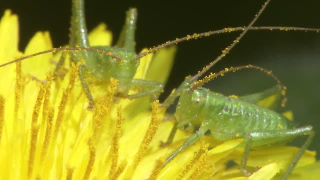 vídeos de stock, filmes e b-roll de baby katydid - grupo pequeno de animais