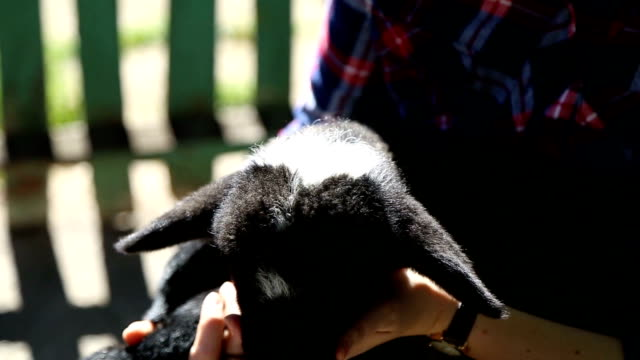 baby lamb - women doing farm animals stock videos and b-roll footage