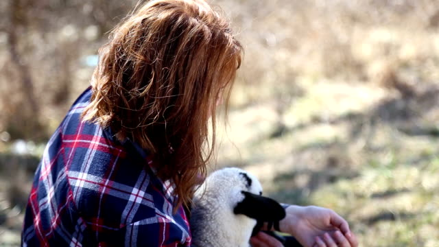 baby lamb - lamb animal stock videos and b-roll footage