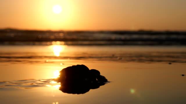 a baby loggerhead sea turtle crawling on the beach - loggerhead sea turtle stock videos & royalty-free footage