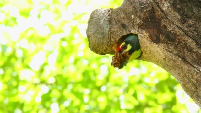 ベビーメガライミダエ鳥 - 雛鳥点の映像素材/bロール