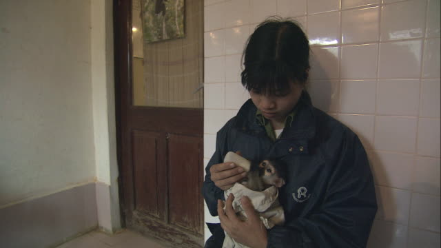 stockvideo's en b-roll-footage met pan baby monkey being fed from a bottle by its handler / cuc phuong, vietnam - red