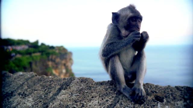 Baby Affe Spielerisch wird