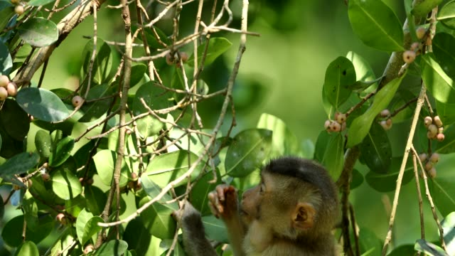 Baby monkey lives in a natural forest of Khao yai national park Thailand