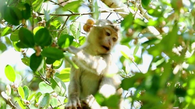 vidéos et rushes de bébé singe vit dans une forêt naturelle de khao yai national park thaïlande - partie du corps d'un animal