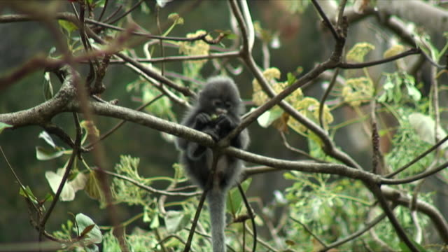 ws baby monkey sitting on branch, railay beach, thailand - primate stock videos & royalty-free footage