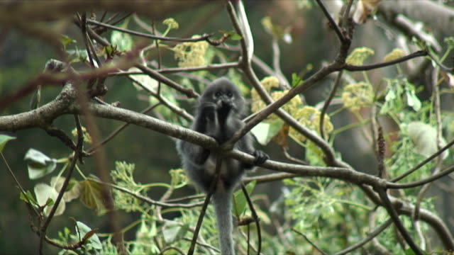 WS Baby monkey sitting on branch scratching foot, Railay Beach, Thailand