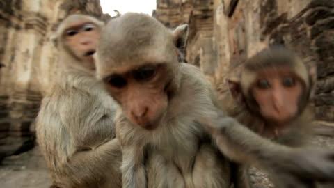 vídeos y material grabado en eventos de stock de monos bebé en templo tailandés - monada