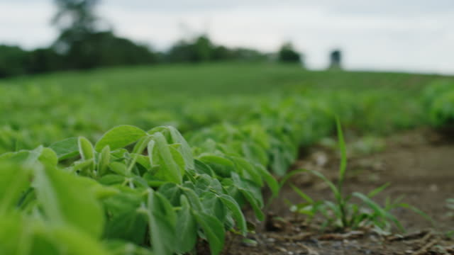 Baby natural organic crops for high end produce in America