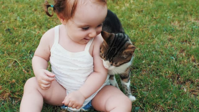 baby playing with cat on outdoor - owner stock videos & royalty-free footage