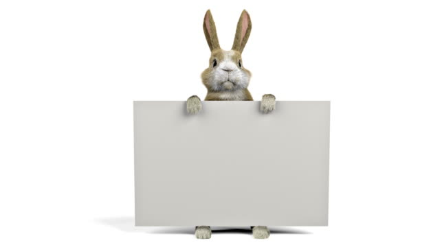 stockvideo's en b-roll-footage met baby konijn houdt een banner, banner is stabiel door de clip - onbeschreven