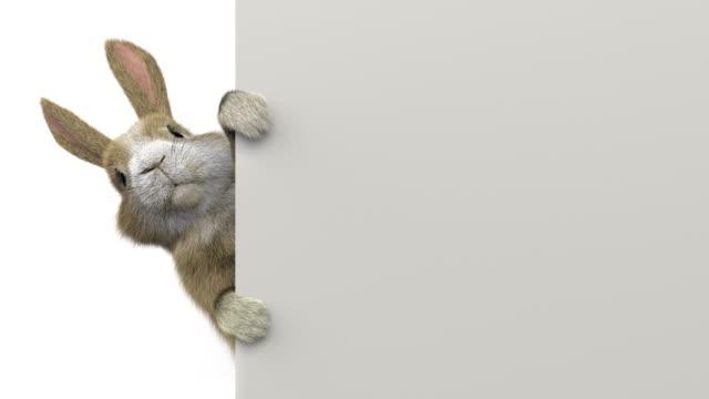 baby rabbit peeking behind a banner / wall - rabbit animal stock videos & royalty-free footage