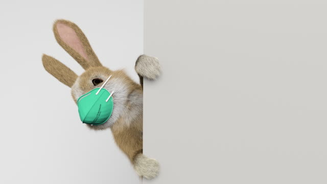 baby rabbit peeking behind a wall or a banner with a surgical mask - information medium stock videos & royalty-free footage