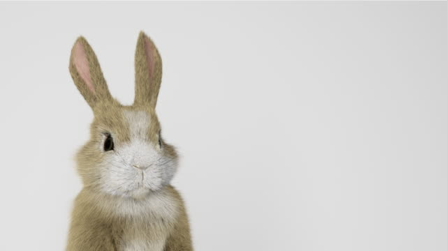 baby rabbit standing up and looking around - rabbit animal stock videos & royalty-free footage