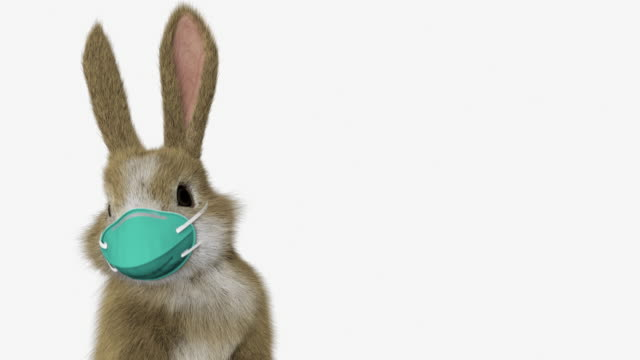 baby rabbit standing up and looking around with a surgical mask - easter stock videos & royalty-free footage