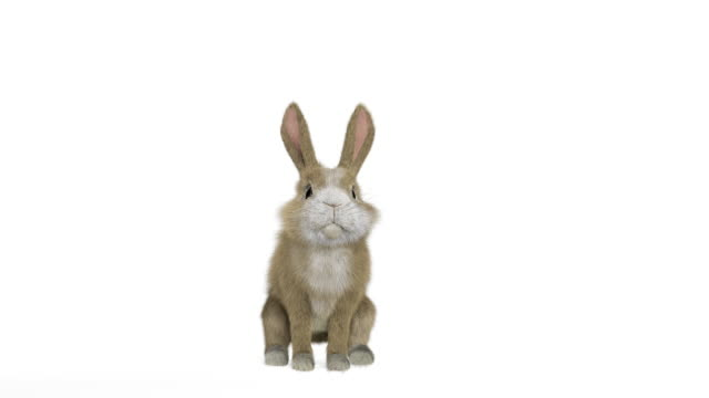 baby rabbit standing up front view - rabbit animal stock videos & royalty-free footage
