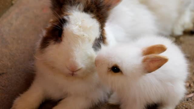 vídeos de stock, filmes e b-roll de filhote de coelho - animal doméstico