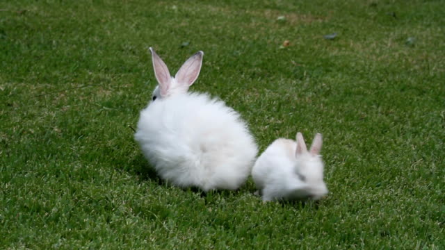 vidéos et rushes de baby rabbits eating and playing - rongeur