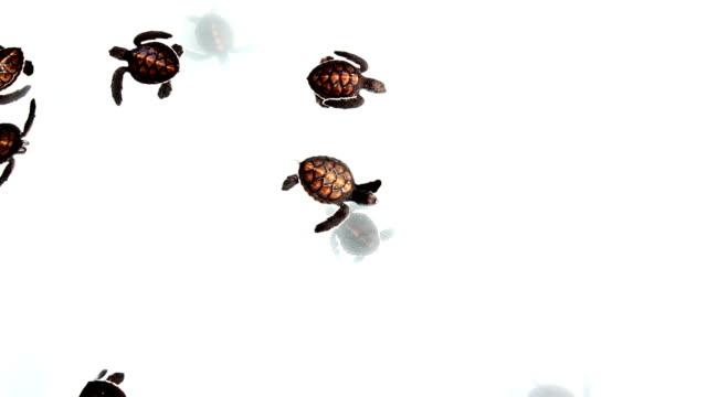 ベビー海亀 - ソフトコーラル点の映像素材/bロール