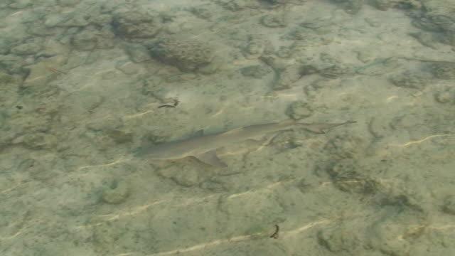 baby shark - stingray stock videos & royalty-free footage