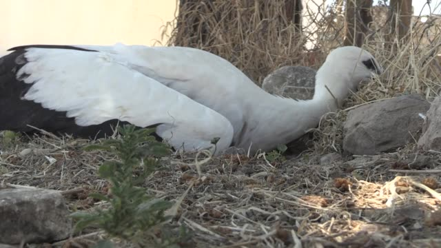 a baby stork falling from its nest was left to his home again by the fire crew in adiyaman southeastern turkey on july 07 2018 - animal nest stock videos & royalty-free footage