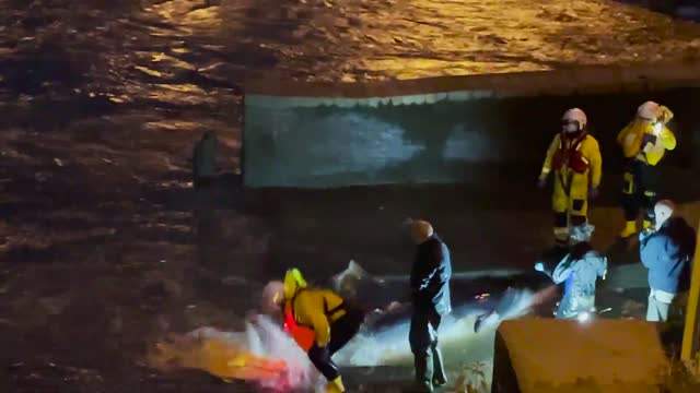 baby whale, reported to be a young minke whale, was released from richmond lock and weir in london early on may 10 after being spotted there the... - sea life stock videos & royalty-free footage