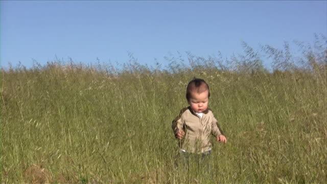 baby wheat (hd) - mindre än 10 sekunder bildbanksvideor och videomaterial från bakom kulisserna