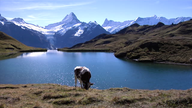 bachalpsee with a view of the north face of the eiger - lake van stock videos and b-roll footage