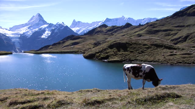 bachalpsee with a view of the north face of the eiger - lakeshore stock videos & royalty-free footage
