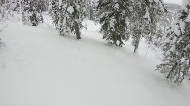 backcountry skifahren tiefschnee durch wald - skijacke stock-videos und b-roll-filmmaterial