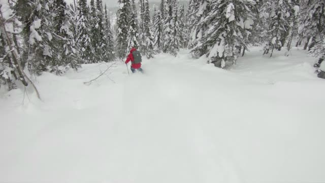 back country skiing deep powder through forest - skiwear stock videos & royalty-free footage