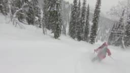 Back country skiing deep powder through forest