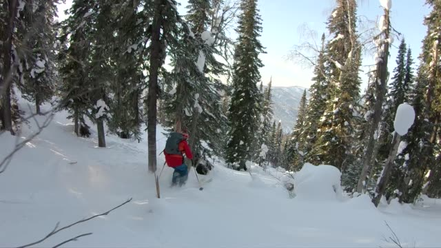 back country skiing through powder in forest - skiing and snowboarding stock videos and b-roll footage