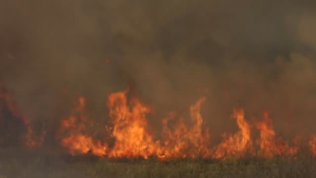 A back fire burns through a field of tall dry grass as firefighters battle the Rocky Fire on July 30 2015 in Lower Lake California Nearly 3000...