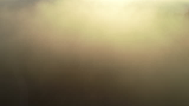 back lit fog in the morning - stock video - atmosphere filter stock videos & royalty-free footage