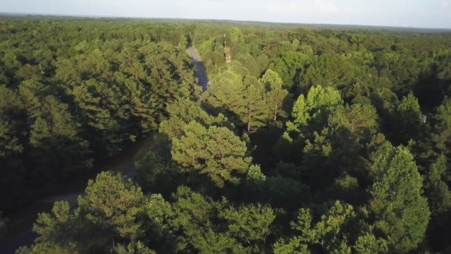 back road in forest, aerial - südliche bundesstaaten der usa stock-videos und b-roll-filmmaterial