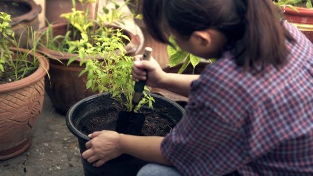 back side woman gardening hand shovel digging tree pot/basil tree