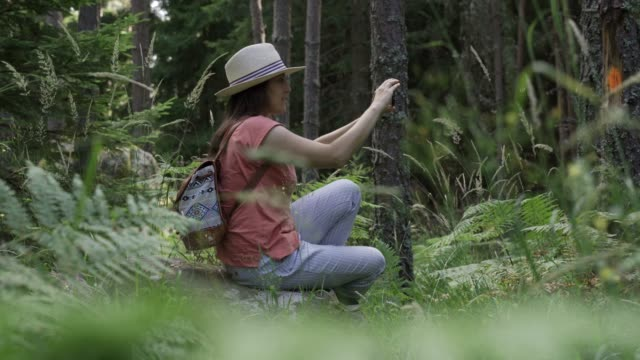back to nature. solo traveler taking photos with her smartphone. a happy young woman tourist walking in the nature. enjoyment outdoors in the forests on a sunny day. - pine woodland stock videos & royalty-free footage