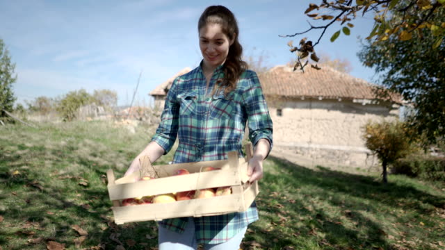 back to the country - apple orchard stock videos & royalty-free footage