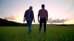 Back view of old father talking with his adult son and walking together on wheat field, beautiful sunset in background